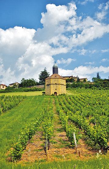 Route des Vins, Bagnols,  vignes, village, Beaujolais des Pierres Dorées